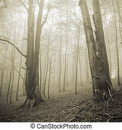 forêt brumeuse, deux, arbres, grand