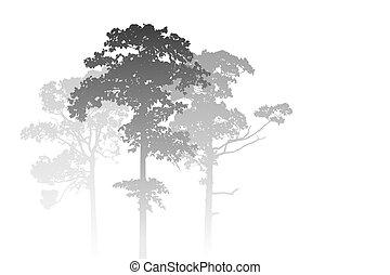 forêt brumeuse, paysage