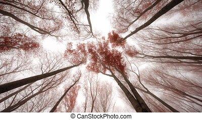 forêt, brumeux, paysage, automnal, métrage