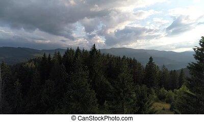 forêt, carpathians, vue dessus