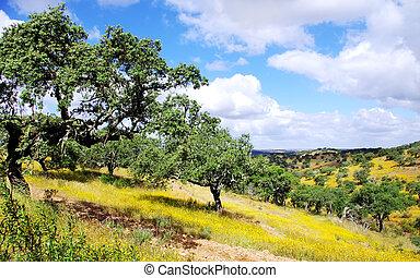 forêt, chêne, sud, portugal, bouchon