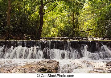 forêt, chute eau