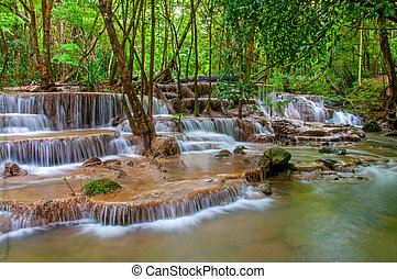 forêt, chute eau, pluie, profond, jungle
