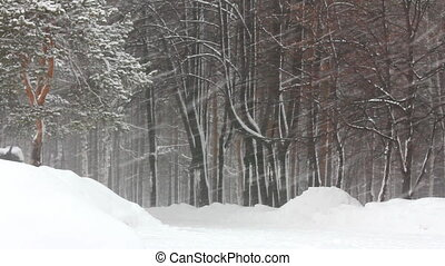 forêt, chute neige, hiver