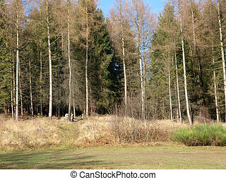 forêt, clairière