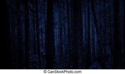 forêt, dépassement, chute neige, arbres, nuit