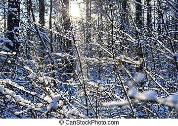 forêt, ensoleillé, hiver, jour, neige