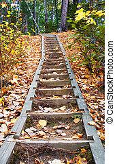forêt, escalier
