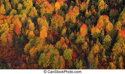 forêt, géorgie, bourdon, république, désert, perspective