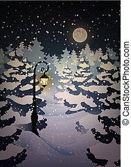 forêt, hiver, nuit