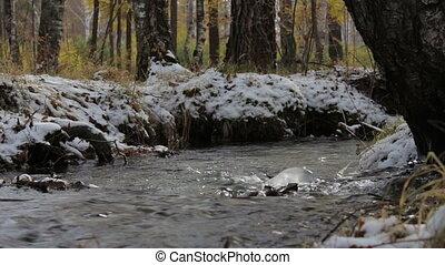forêt, hiver, ruisseau, neigeux