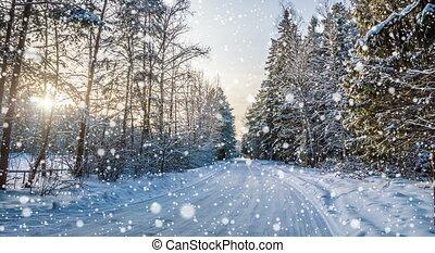 forêt, hiver, tomber, neige