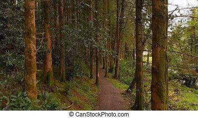 forêt, jogging, homme, 4k, chemin