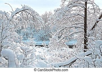 forêt, jour, hiver