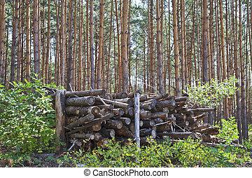 forêt, journaux bord