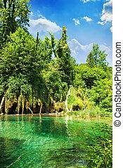 forêt, lac