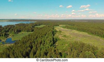 forêt, lac, vue aérienne