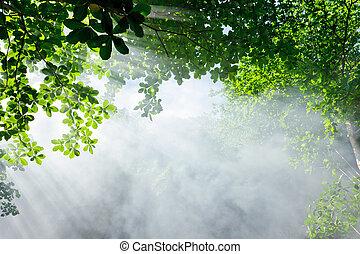 forêt, lumière soleil, matin