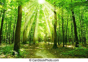 forêt, lumière soleil