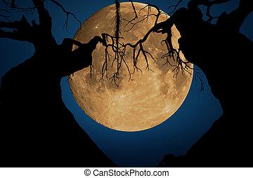 forêt, lune