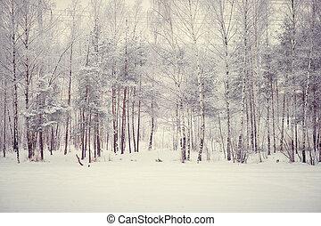 forêt, magie, hiver