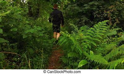 forêt, marche homme, 4k