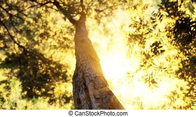 forêt, matin, brumeux, tôt
