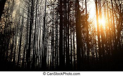 forêt, mort