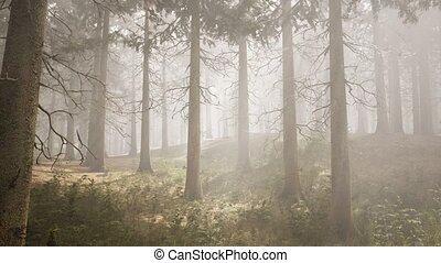 forêt, naturel, rayons soleil, impeccable