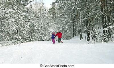 forêt, neigeux