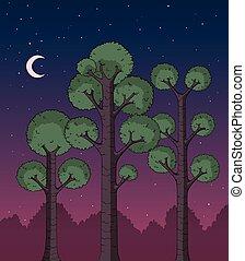 forêt, nuit