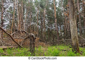 forêt, orage, ruiné