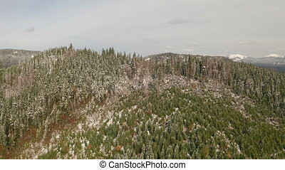 forêt, ou, automne, montagne neigeuse, automne, winter.