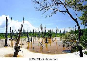 forêt pétrifiée