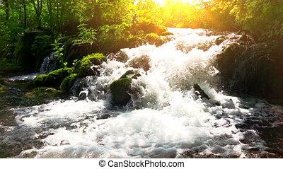 forêt, parc, chute eau, lacs, plitvice, croatie, national