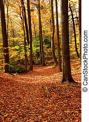 forêt, paysage, automne