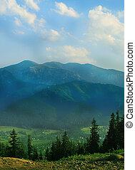 forêt, paysage., montagnes vertes