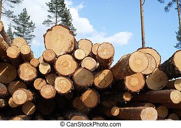 forêt, pin, journaux bord