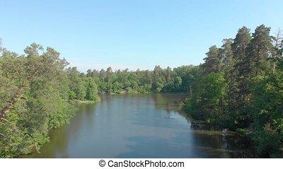 forêt, pin, lac