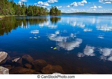 forêt pin, reflet, dans, les, lac