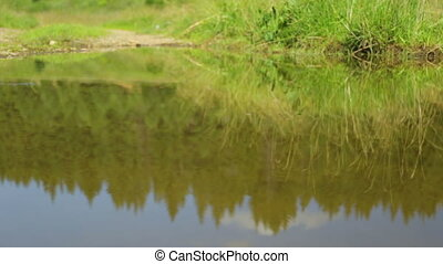 forêt, réflexion eau