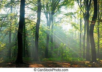 forêt, rayons soleil, automne, verser