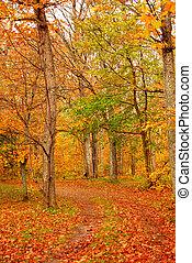 forêt, route, automne