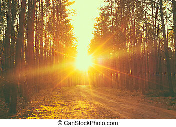 forêt, route, coucher soleil, rayons soleil