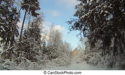 forêt, route, hiver