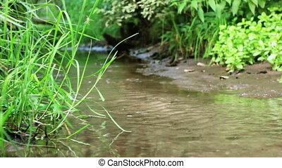 forêt, ruisseau, calme, nature.