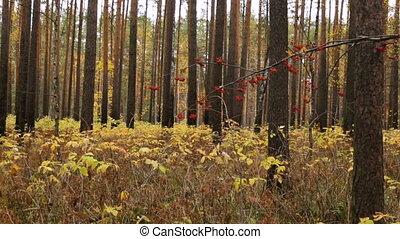 forêt, saison, automne