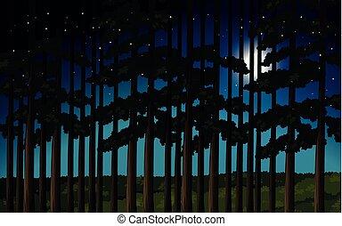 forêt, scène, nuit
