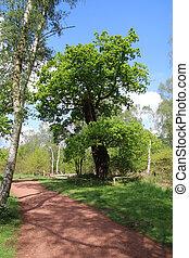 forêt, sherwood