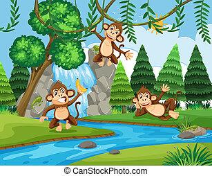 forêt, singe
